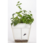 'Aquafarm' Aquaponic Indoor Garden with Self Cleaning Fish Tank  $29.98 + fs @nordstrom.com